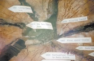 The growth rings on this old tree, which is under cover at Lilly Cornett Woods, offer a lesson in world history.