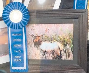 Photographer Kimberly Maggard took ribbons in seven categories of the Mountain Heritage Photo Contest. Among the first-place pictures is this photo of an elk.