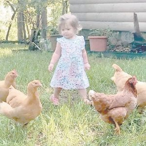 Harlynn Pedigo, granddaughter of Albert and Tonya Tackett, is shown with her pet chickens.