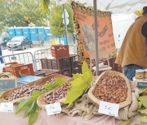 Gwen Johnson attended the La Fete des Chataignes — Chestnut Festival — in Collobrieres Village in the south of France.