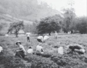 """Doreen Fields Calhoun posted this photo of her family's strawberry patch in Letcher County on Facebook with this comment: """"Picking strawberries to send to market in the 50's, it was chilling cold in the mornings; we even had a fire at the end of the patch. We had to have them picked, graded, and packaged for the truck to pick them up at 10:30. My house now sits on this site. My mom hired people from all over to pick for her."""""""
