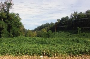 A kudzu-covered field (left) at Marlowe will become part of the Thunder Mountain Sport Shooting and Resort Park.
