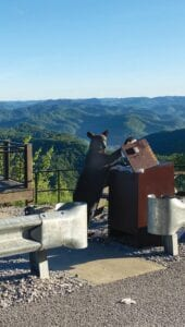The story behind the bear photo This photo of a young black bear foraging for food in a garbage can on Pine Mountain was taken by Whitesburg resident Shannon Trent, who tells about the encounter in story at left. (Photo courtesy Shannon Trent)