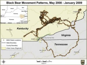 BEAR TRACKS — A state Fish and Wildlife map shows the travels of a bear tagged with a GPS tracking device near the Letcher County line on Pine Mountain. (Kentucky Department of Fish and Wildlife Resources)